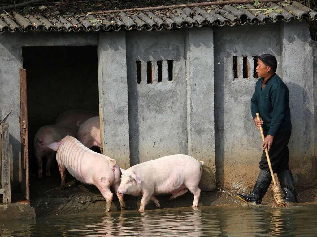 Neue Schweinegrippe China
