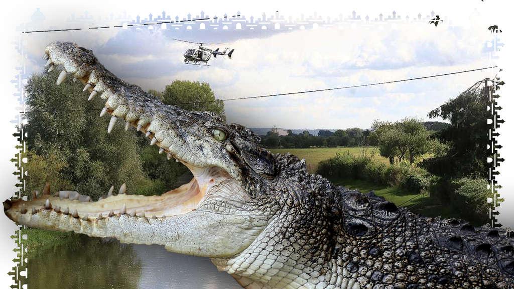 Unstrut Krokodil