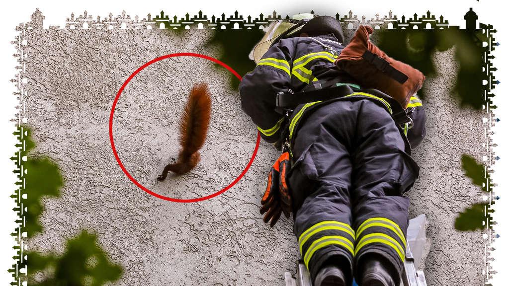 Eichhörnchen Rettung
